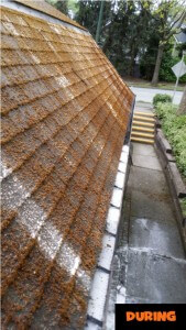 Moss Removal During