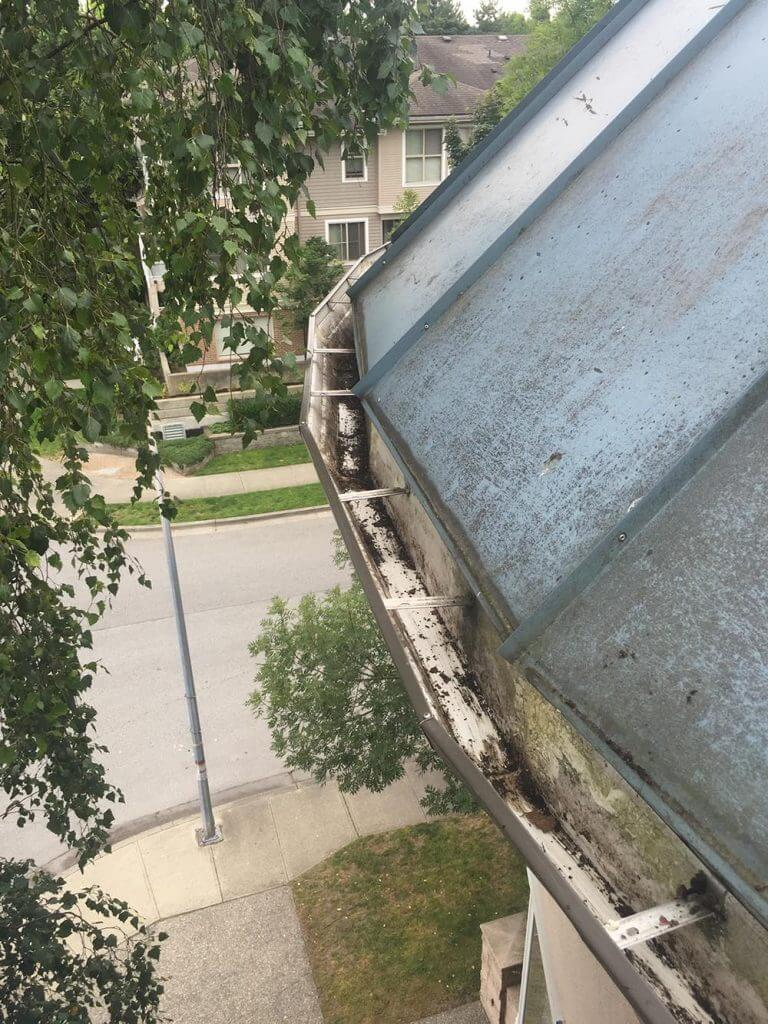 Gutter Cleaning Gorilla Property Services