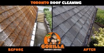 toronto roof cleaning