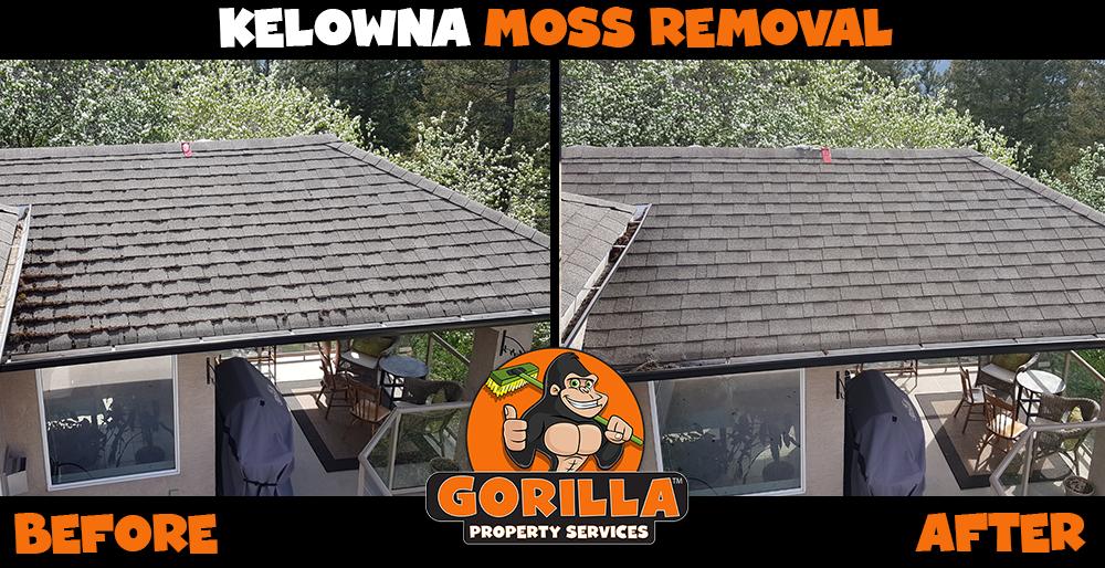 kelowna moss removal