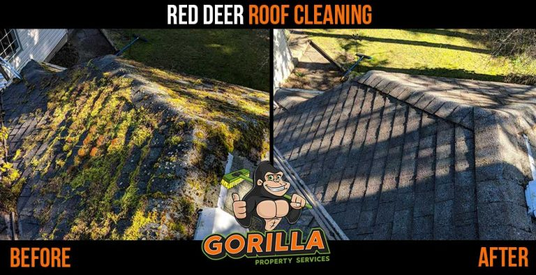 Red Deer Roof Cleaning & Moss Removal